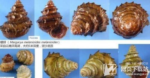 螺蛳拟列为二级保护动物 专家回应螺蛳粉还能吃
