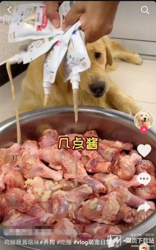 宠物博主让狗当大胃王 强行塞朝天椒